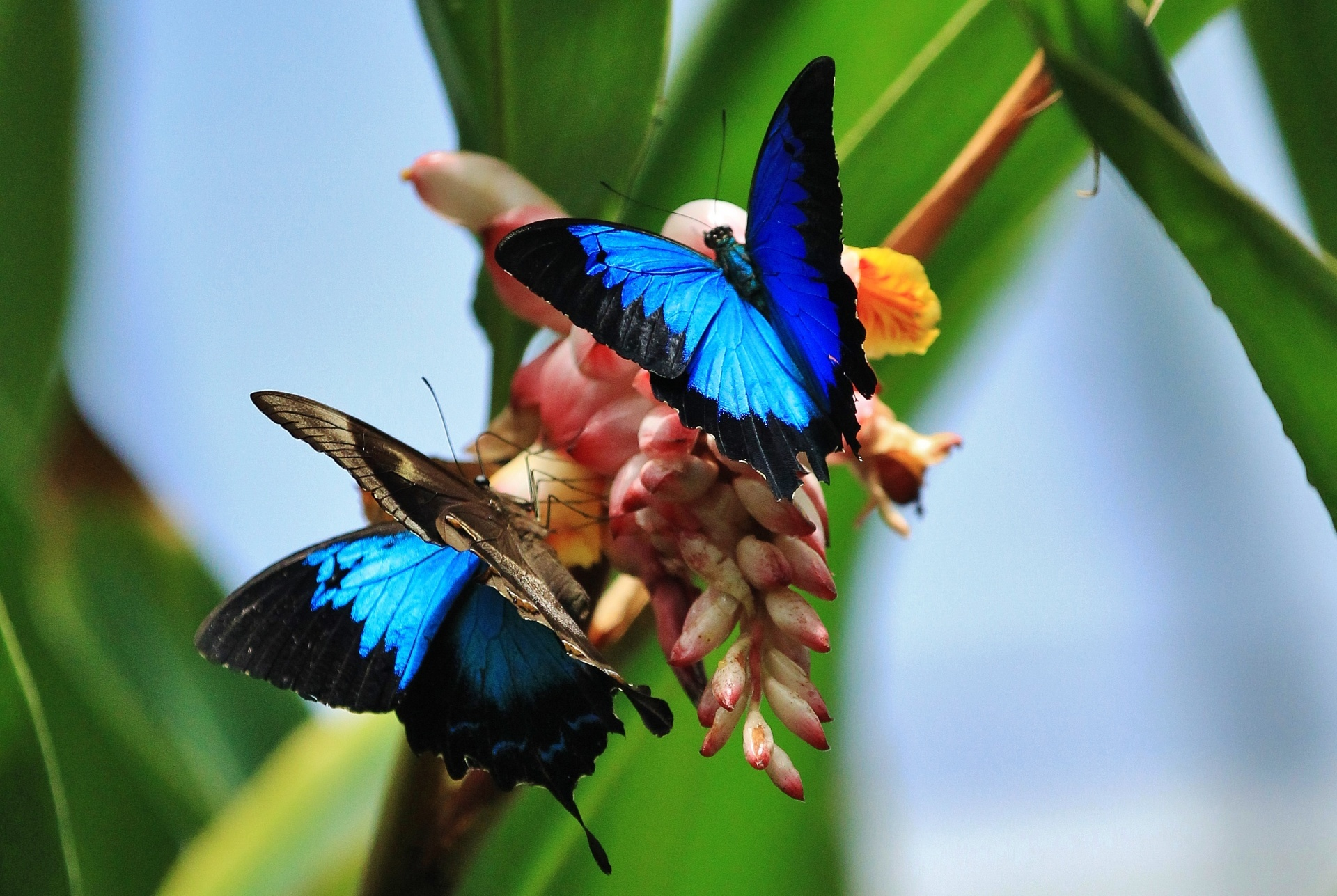 Australian Butterfly Sanctuary Cairns Tourism Town