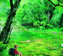explore the wonders of Cape Tribulation and the famous Daintree National Park with a Full Day Starter PAK Tour