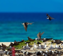 Michaelmas Cay is a National Park and a protected sanctuary for migratory seabirds