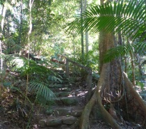 Rainforest Walk - Kuranda Riverboat