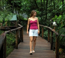 Rainforest walk