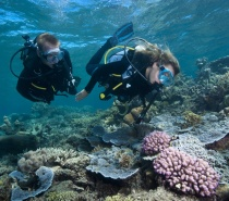 Scuba Diving - Great Barrier Reef