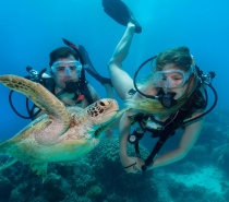Introductory Diving is a program designed for those that have no official SCUBA certificate.