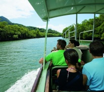 Daintree River Wildlife Cruise – Our journey continues to the majestic Daintree River for a one-hour Wildlife and Crocodile exploration.
