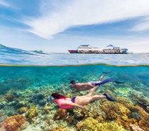 Moore Reef: Outer Great Barrier Reef Snorkelling