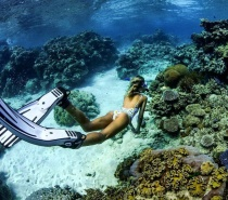 Enjoy all our full day tour inclusions including snorkelling, lunch, sun bathing plus your choice of either an Introductory dive or Certified dive