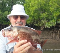 MANGROVE JACK FISHING
