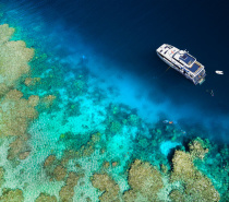 2 Snorkel / Dive sites | Norman / Saxon / Hastings Reef | Cairns' Outer Reefs, The Great Barrier Reef
