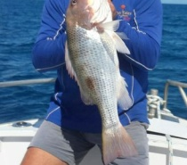 FISH TALES CHARTERS BLUEWATER (REEF) FISHING FOR FINGERMARK.JPG