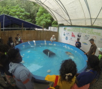Visiting the Turtle Rehab Centre