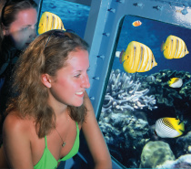Enjoy the spectacular coral formations without getting wet on our board SubXplore - our semi-submersible