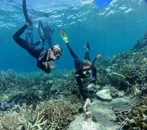 Ocean Freedom's professional crew of qualified dive instructors will introduce you to the wonderful world of scuba diving on the amazing Great Barrier Reef