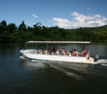 Daintree River Croc/Wildlife Cruise