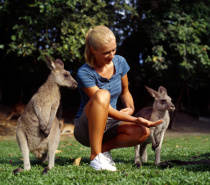 Wildlife Habitat Kangaroo Feeding