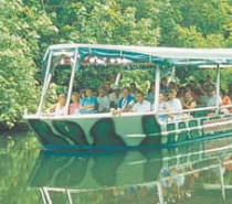 Crocodile Express Daintree River Cruise