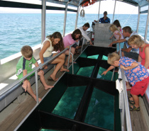 Green Island: Glass bottom boat tour