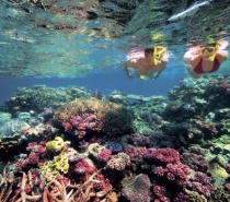 Check out the Great Barrier Reef