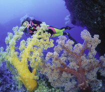 Mike Ball 7 Night Coral Sea Dive Expeditions