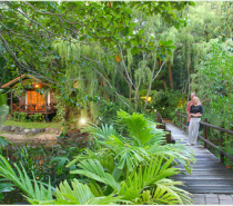 Bungalows nestled in a natural rainforest