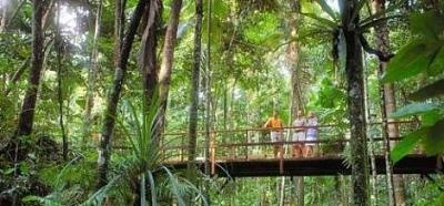 Cape Tribulation & Daintree Rainforest Tour