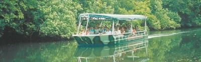 Daintree River Cruise - Crocodile Express