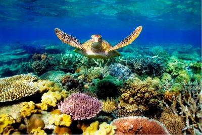 Great Barrier Reef Locations
