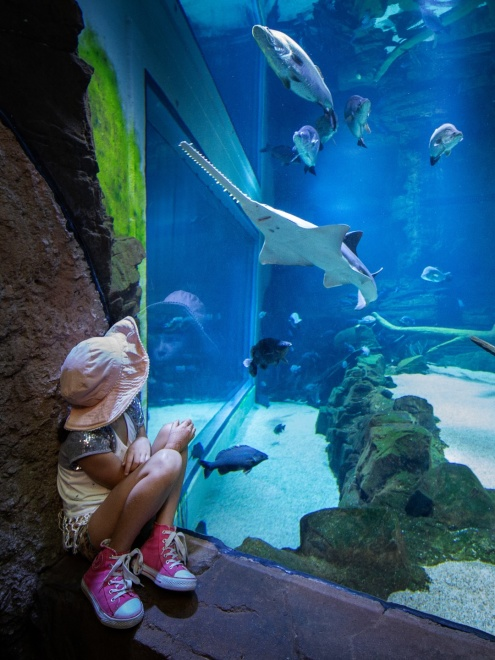 Cairns Aquarium Event times
