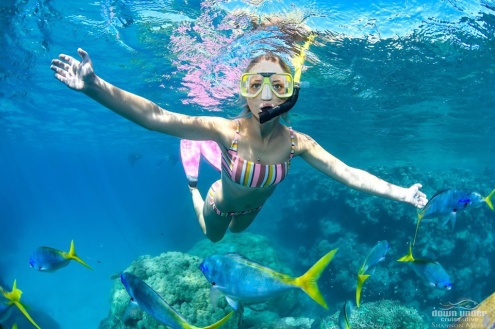 Evolution Snorkelling Tour from Cairns