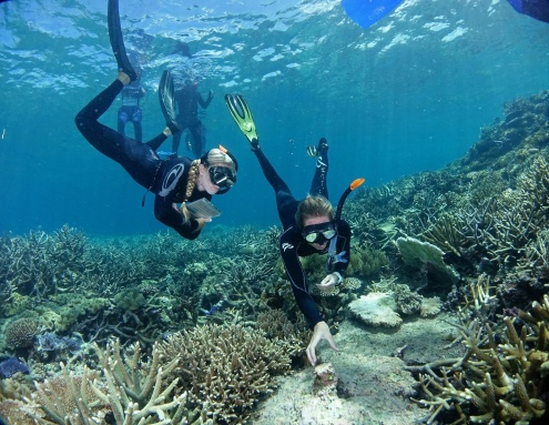 Introductory Scuba Diving with Ocean Freedom