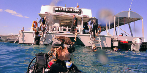 Certified Scuba Diving with Ocean Freedom