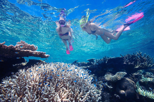 Marine Biology Guided Snorkel Tour on Evolution
