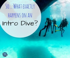 So... What exactly will happen on my Introductory Dive?