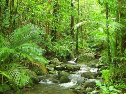 Daintree Tropical Rainforest 1 or 2 day 4wd tour