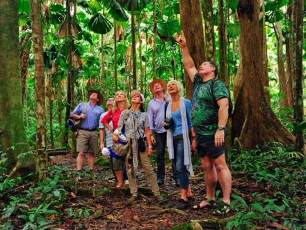 Rainforest Spotlighting Tours Cairns