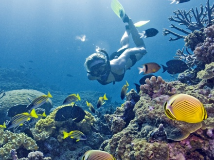 Reef Daytripper Snorkelling & Sailing Adventure