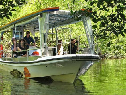 DAINTREE RIVER CRUISE with return transport
