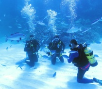 you'll be able to experience the excitement of scuba diving whilst under very close supervision of an instructor