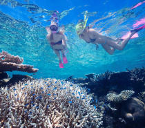 Cairns best snorkelling tour on the outer Great Barrier Reef