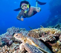 Jump in and explore the underwater world at two distinctive reef locations.