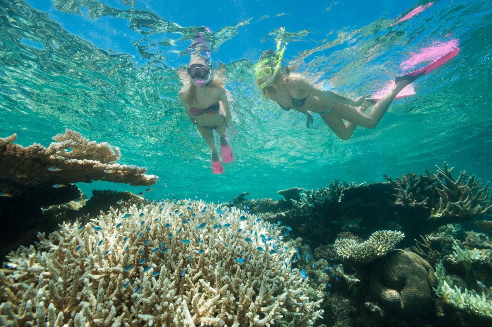 Evolution - Snorkel & Dive - Cairns - Tourism Town - Find ...